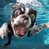 Thumbnail image for Dog Paddle