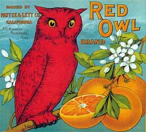 Red Owl Oranges