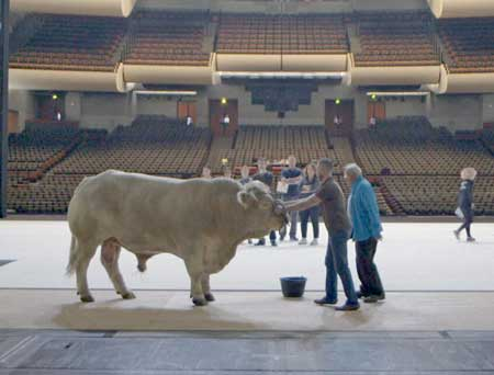 Rehearsing the live bull for 'Moses and Aron' from 'The Paris Opera'