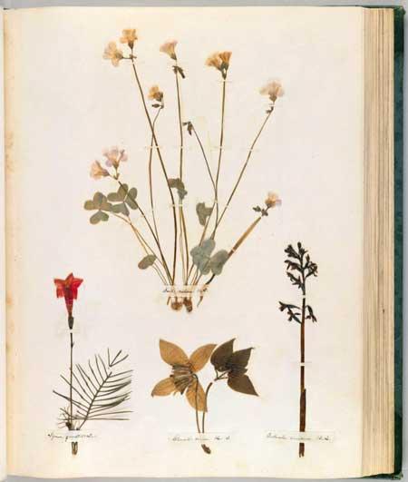 Emily Dickinson Herbarium